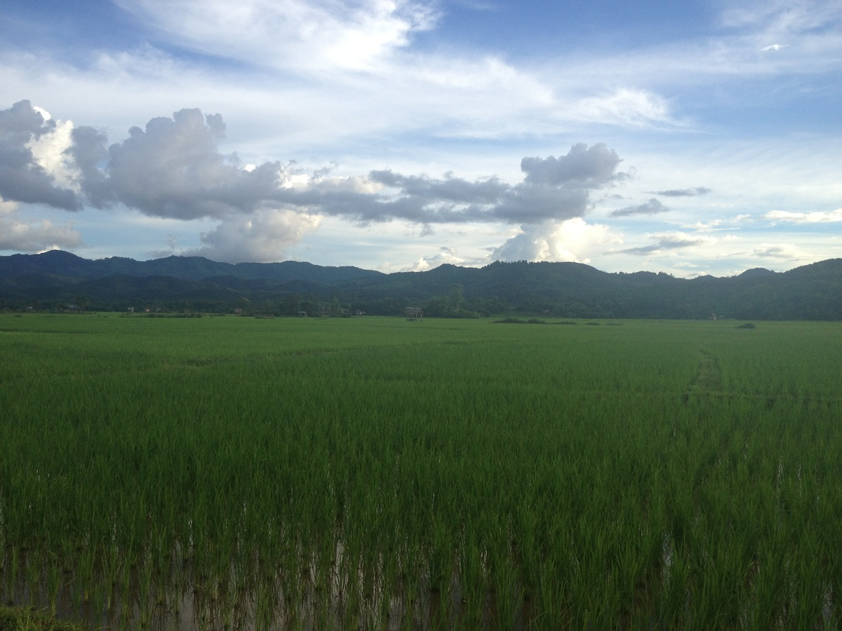 Rice fields and mountains views (Luang Namtha, Laos)