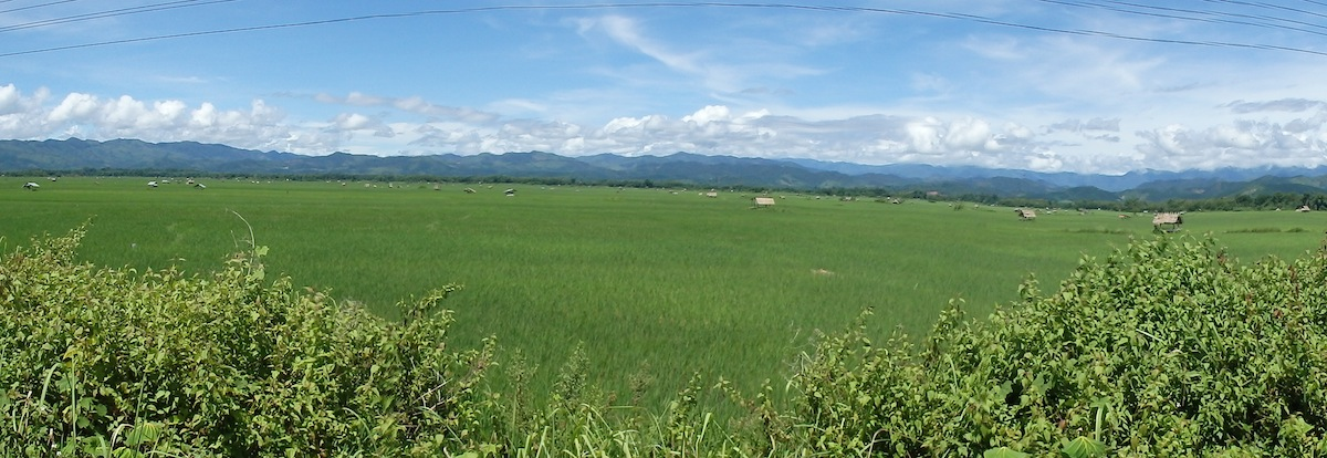Rice fields and mountains views