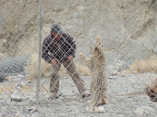 Loli the playful and deadly (KKH, Pakistan)
